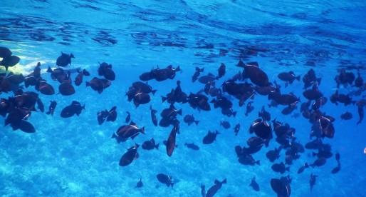 Snorkeling at Molokini and Turtle Town near Maui, Hawai'i