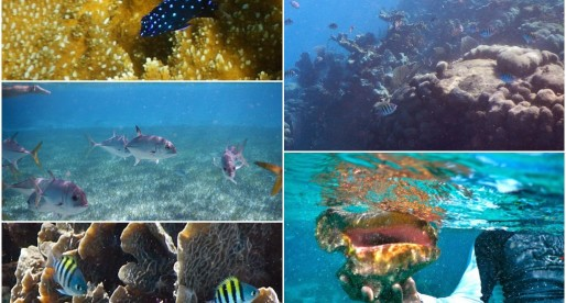Your Guide to Snorkeling near San Pedro, Belize