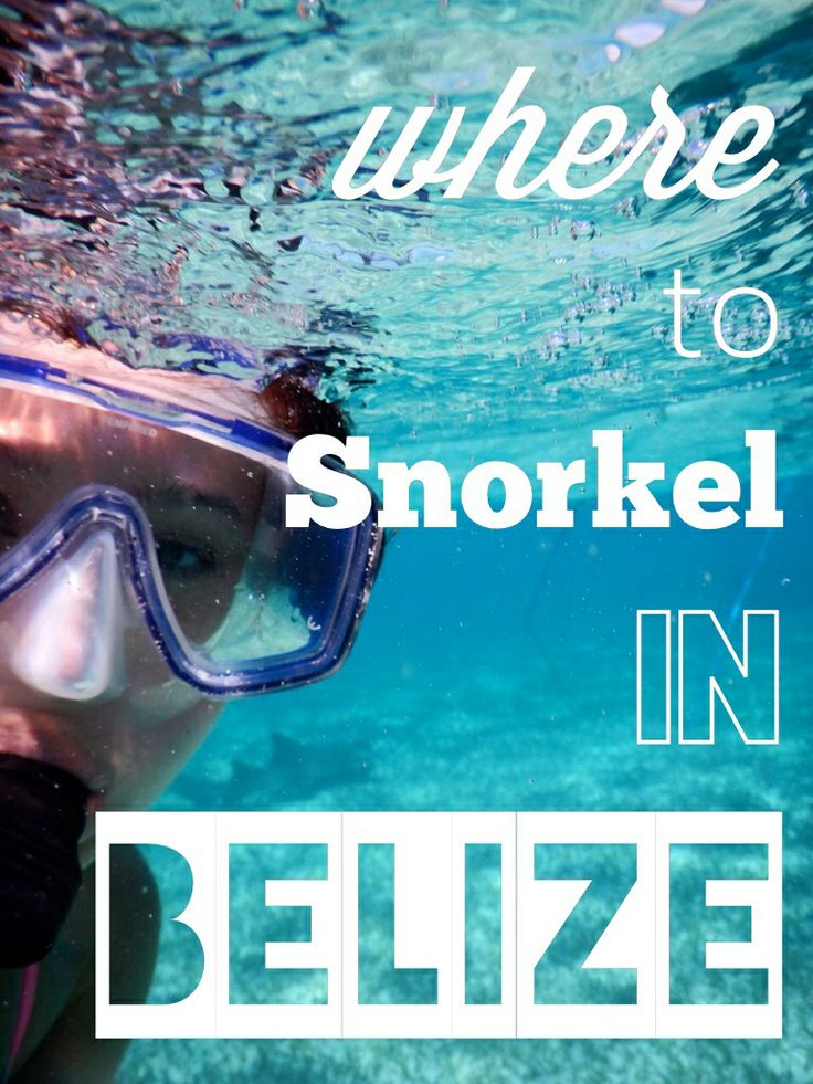 5 of the BEST spots to snorkel in Belize - all different wildlife! | www.apassionandapassport.com