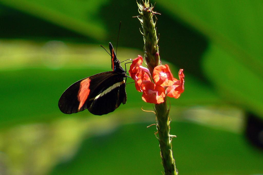 butterfly garden costa rica