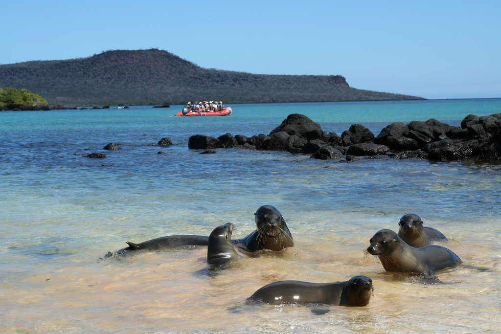 GALAPAGOS ISLANDS: Best Things to See and Do