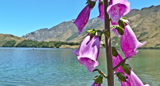 10 Adventures in Queenstown, New Zealand You Need to Try