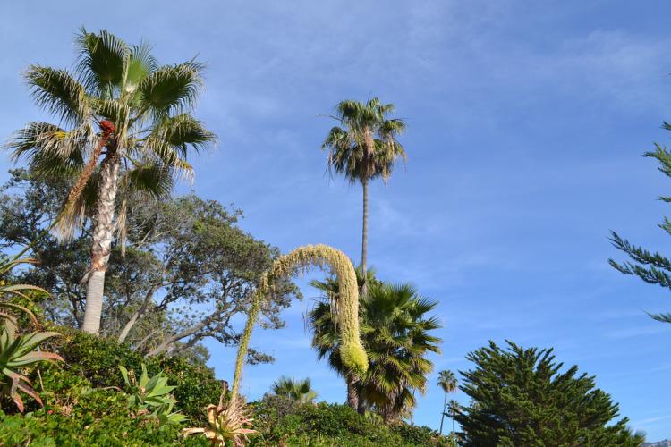 weird plant in heisler park