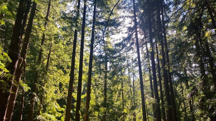 perisima creek redwoods half moon bay