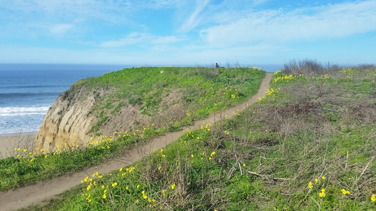 Dog Friendly Places To Stay In Half Moon Bay