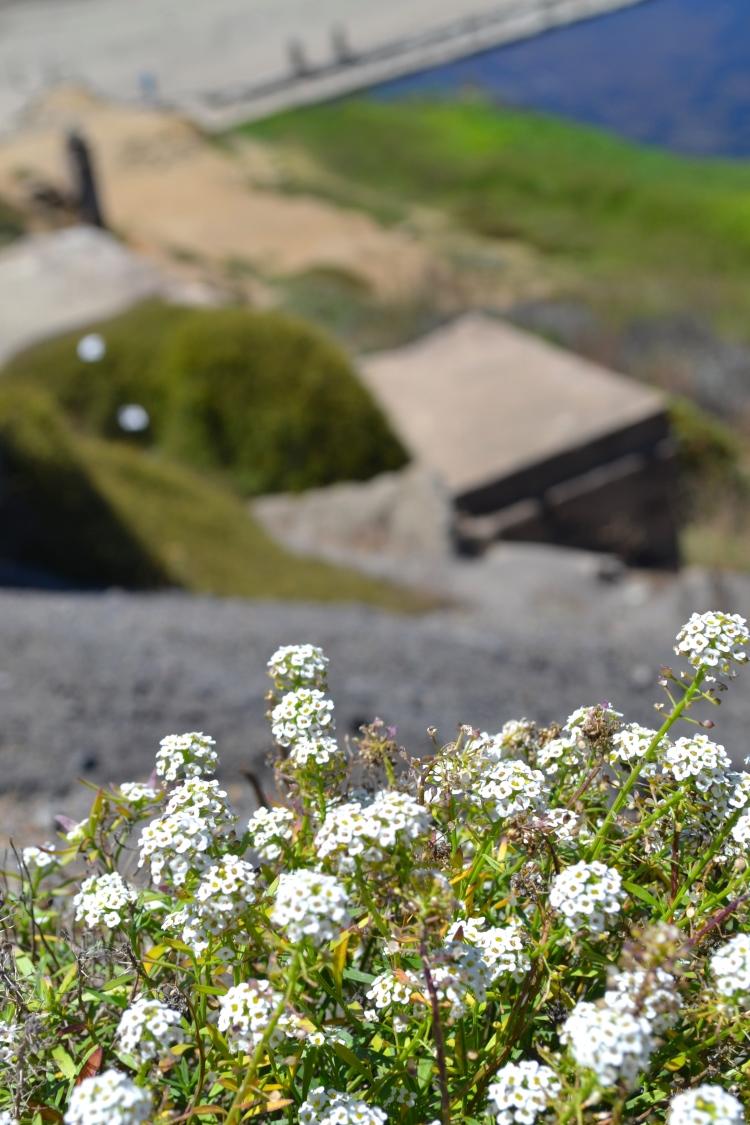lands end hike san francisco