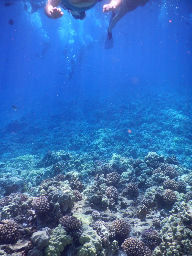 snorkeling at molokini crater maui