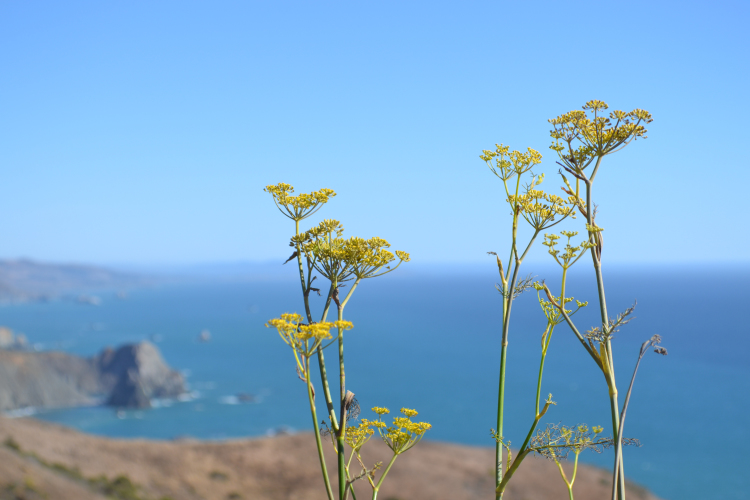 highway 1 PCH flowers california