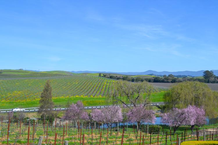 10 Vineyards to Visit on Your Next Trip to Napa Valley | www.apassionandapassport.com