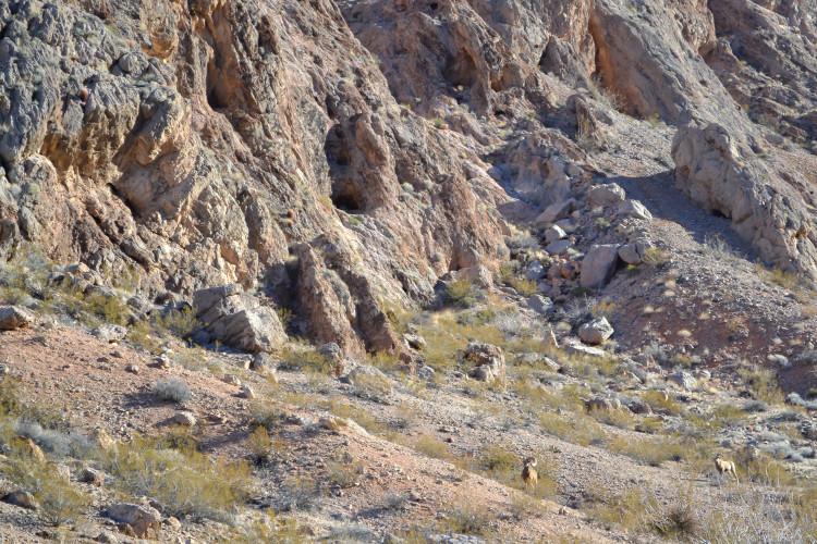 Valley of Fire from Las Vegas: A Fiery Day Trip!