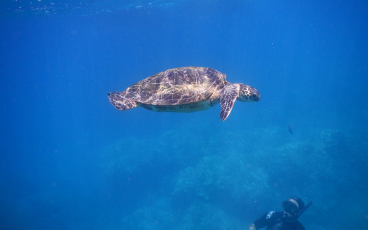 5 QUICK Underwater Photography Tips to Get Better Photos When Snorkeling! | www.apassionandapassport.com