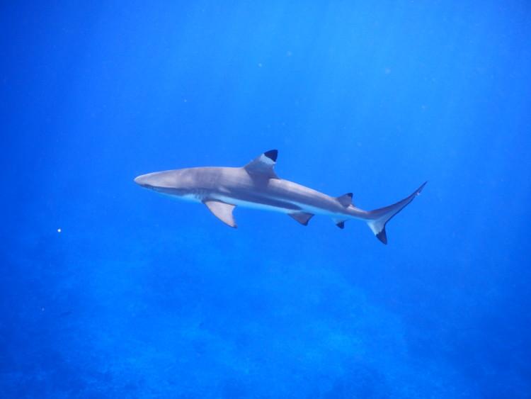 5 QUICK Underwater Photography Tips to Get Better Photos When Snorkeling! | www.apassionandapassport.com