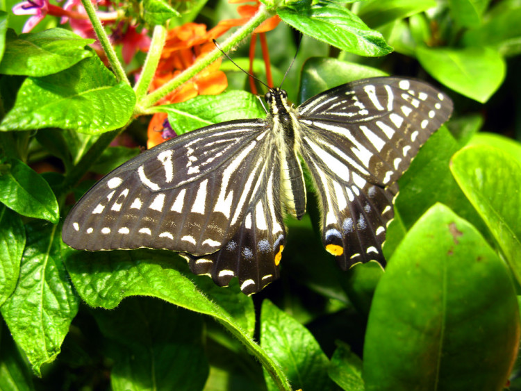 butterfly exhibit at National Natural History Museum Washington DC