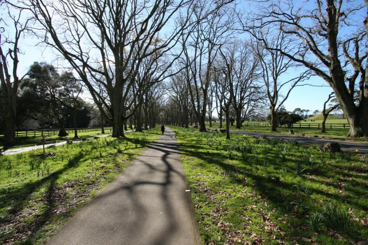 Cornwall park Auckland