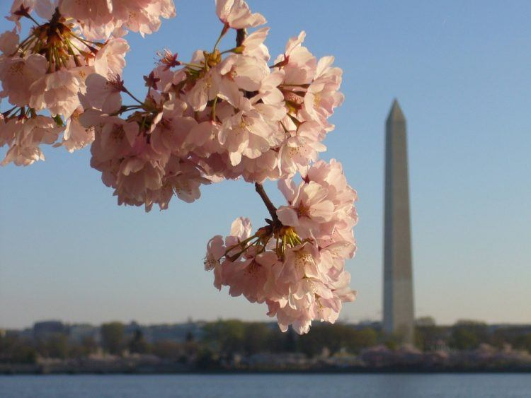 Long weekend trips from NYC --> cherry blossoms, stunning beaches, fall foliage, and more