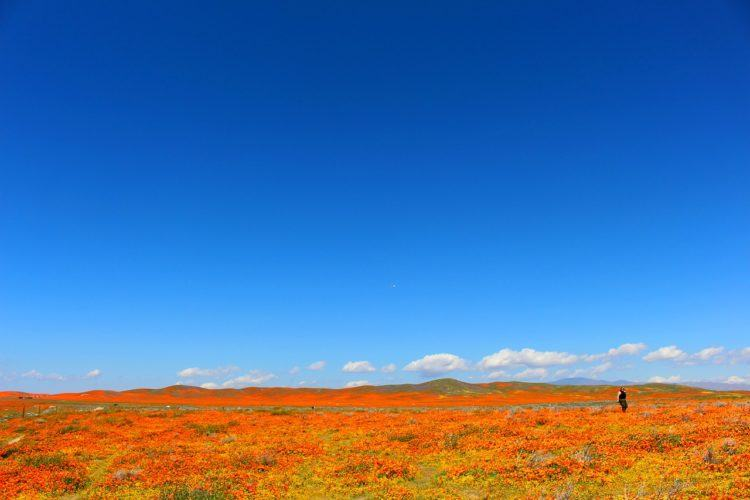 things to do in California: the ultimate California bucket list!