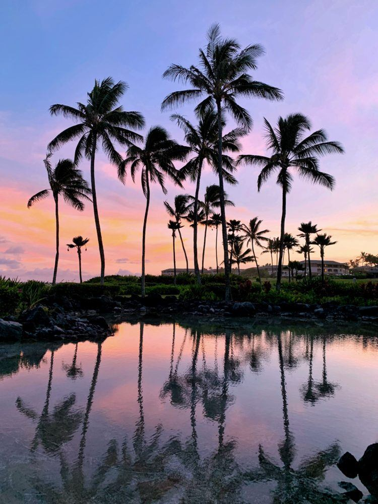 Planning a trip and looking for the best things to do in Hawaii?! From waterfall hikes and swimming with sea turtles to indulging in hula pie and snacking on tropical fruit, here's 200 things to add to your Hawaii bucket list!