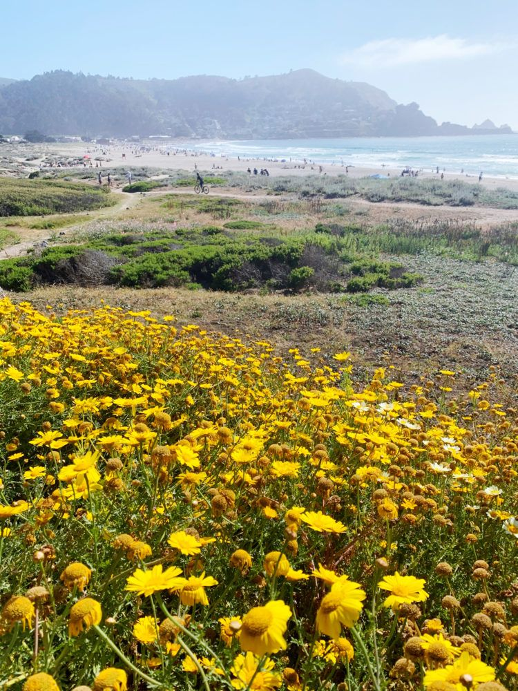 Looking for the best hikes in Pacifica, California? Look no further! I've rounded up my favorite Pacifica hiking trails with panoramic coastal views!