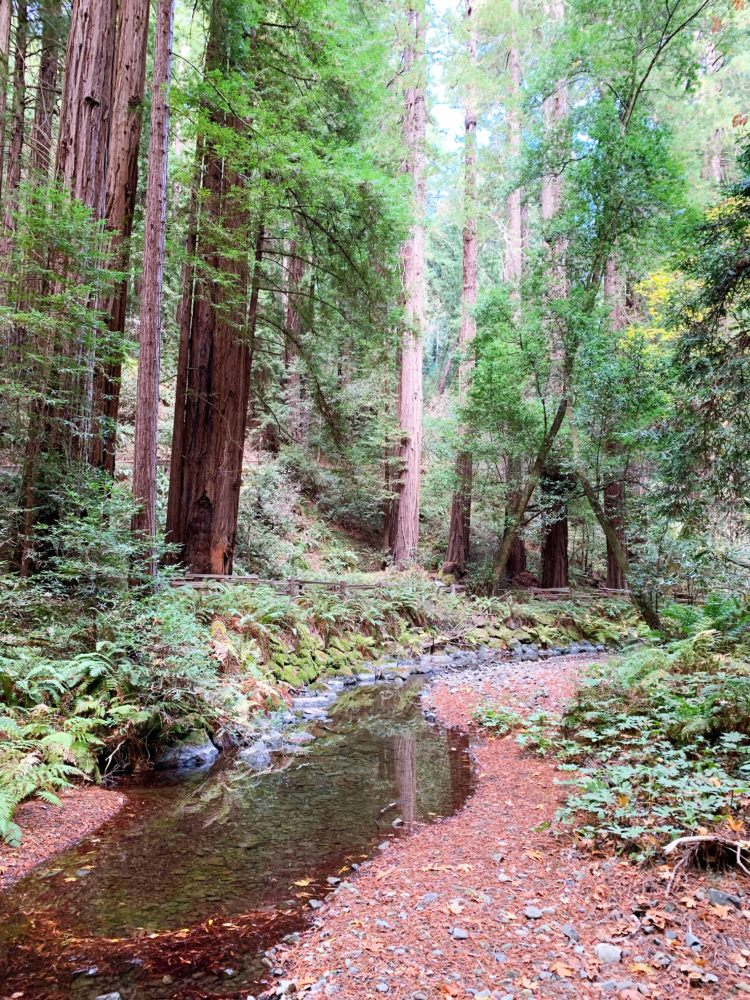 San Francisco to Muir Woods Day Trip: Everything You Need to Know