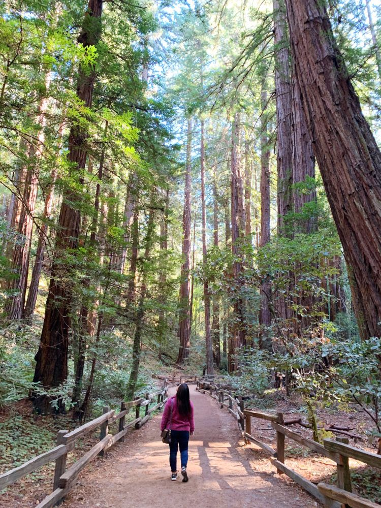 Planning an epic Northern California road trip and looking for the best stops to make?! I'm here to show you all the highlights (think redwoods, deep blue lakes, and freshly shucked oysters)!