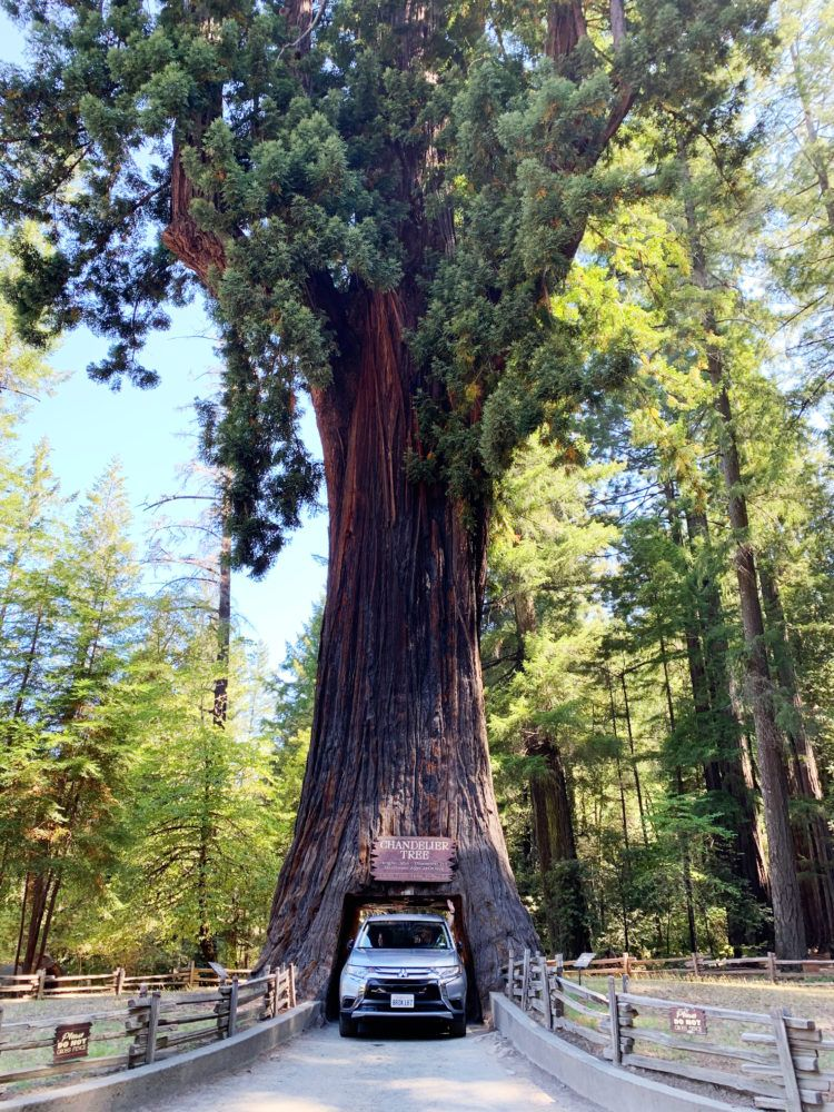 Best Places to See Redwoods Near San Francisco - Leggett Drive Thru Park