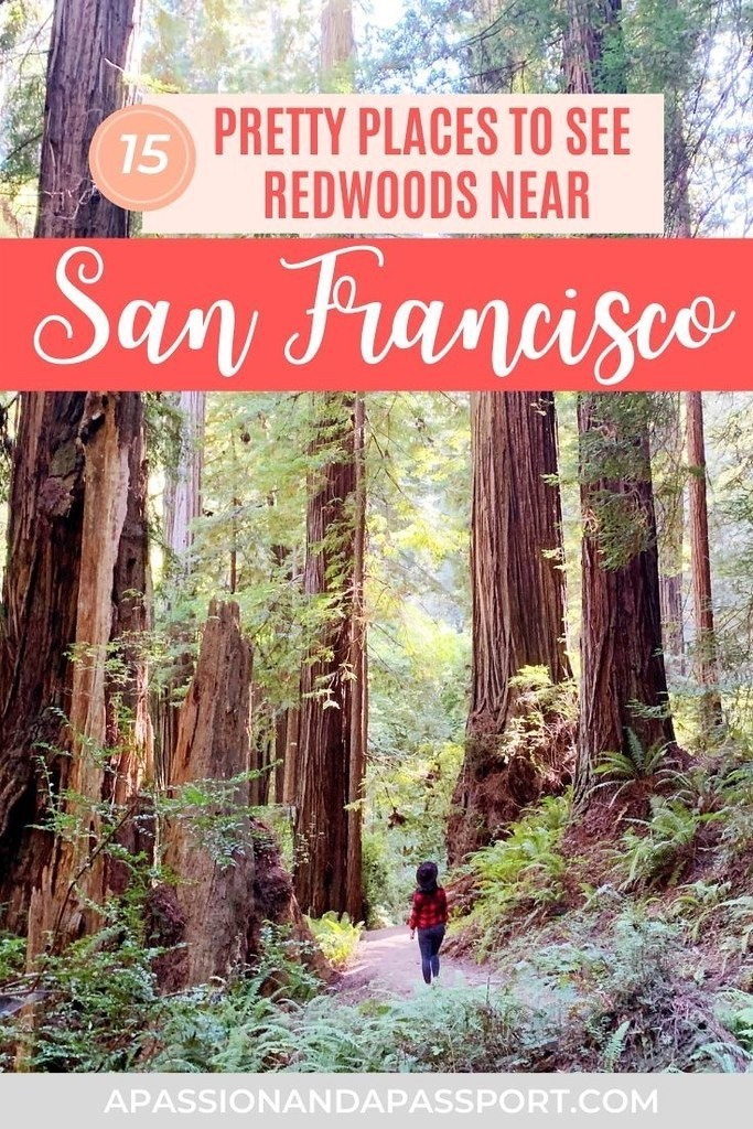15 Amazing Places to See the Beautiful Redwoods Near San Francisco