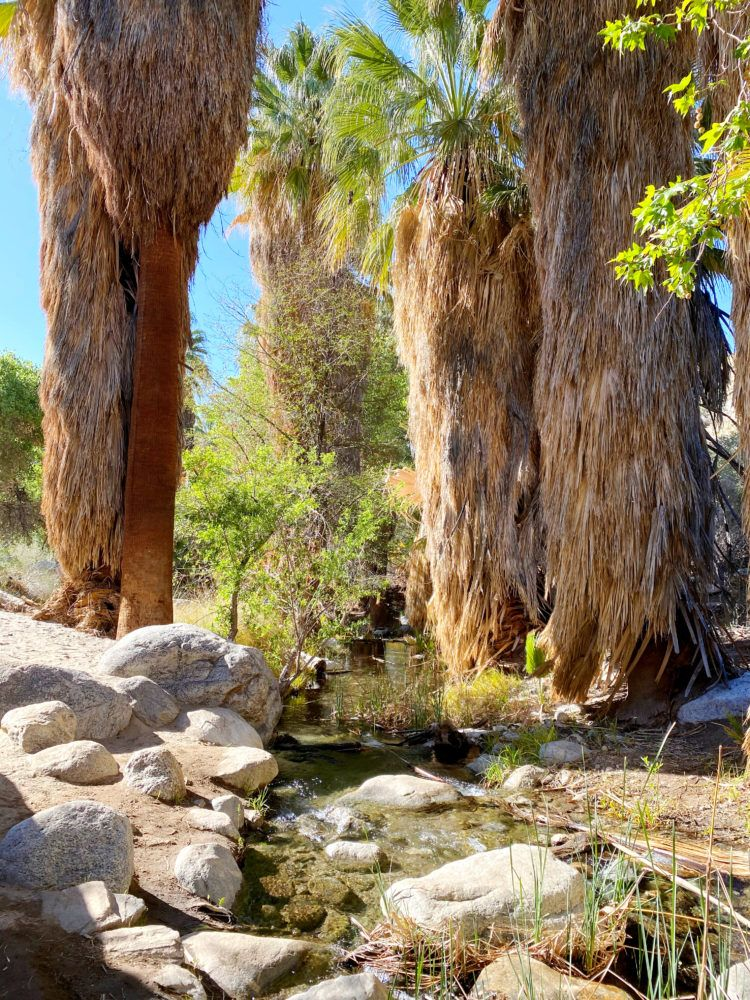 Hiking the Andreas Canyon trail in Palm Springs