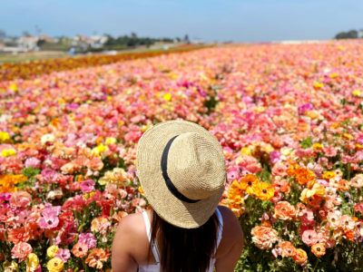 Headed to SoCal and looking for info about the Carlsbad Flower Fields? I'm sharing everything you need to know about the best spring activity in California!
