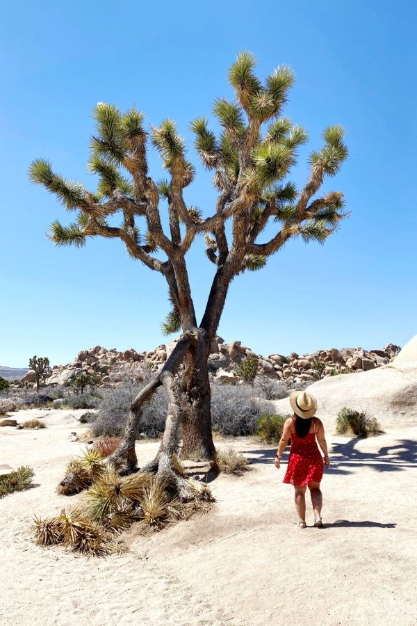 Day trip to Joshua Tree itinerary