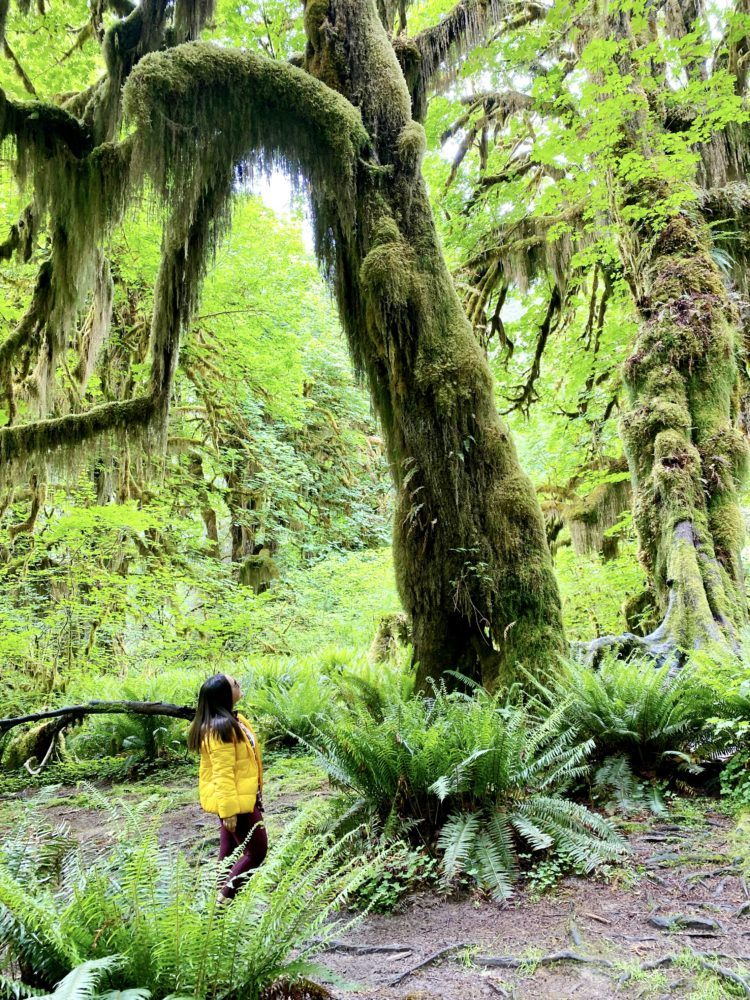 Hall of Mosses trail in Hoh Rainforest Olympic National Park